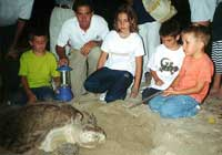 Puerto Vallarta Sea Turtles