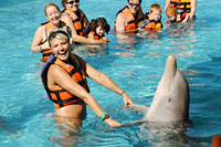 Handshake - Dolphin Encounter, Puerto Vallarta