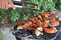 BBQ Lobster Beach Party, Puerto Vallarta