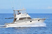 38' Bertram Fishing Yacht - Vallarta
