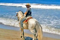 Puerto Vallarta Private Horseback Riding