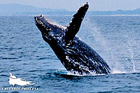 Whale Watching Tour Vallarta