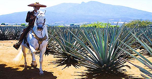 Guadajalara Overnight With Tequila Tour Puerto Vallarta
