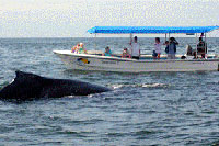 Puerto Vallarta Whale Watching